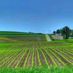 campo agricola  arrendamiento